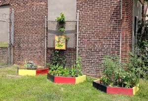 Urban gardens have benefits for individuals, communities, and the environment.