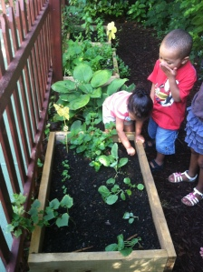 Children in Lottie's child care program learn about gardening and nutrition through the Garden Project.